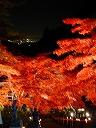 開山1250年、大山寺の紅葉ライトアップ