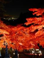 大山寺の紅葉ライトアップ